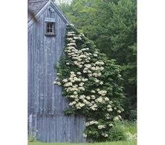 Raspberry  POD Easy Edible GardeningWall Climbing Plants Nz