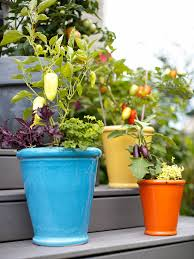 159 Best Container Gardening Images On Pinterest  Plants Trees Container Garden Ideas Vegetables
