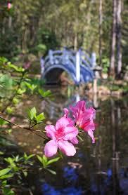 magnolia plantation gardens charleston sc