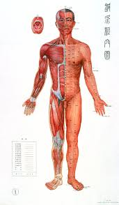 Traditional Chinese Acupuncture Chart 1