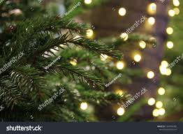 Christmas Branches With Lights Branches Evergreen Christmas Tree Lights Background Stock