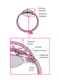 Overview Of Glaucoma Eye Disorders Merck Manuals