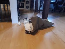Kater macht sein großes geschäft nicht ins katzenklo. Meine Katze Ist Zickig Katzenverhaltensberatung Katzenpsychologie Tierheilpraxis Fur Katzen