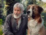 Bud Fisher Dog Gone Movie