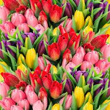 ᐈ for spring flowers stock pics