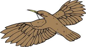 flying sparrow clipart. Delighful Flying Bird In Flying Sparrow Clipart R