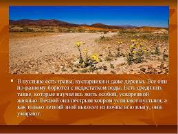 Реферат на тему растения полупустынь и пустынь Интересное в мире  материалы реферат на тему растения полупустынь и пустынь термобелье имеет