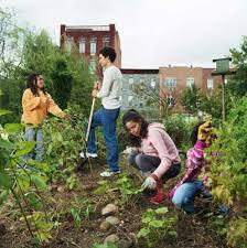community gardening. Wonderful Gardening Neighbors Working In Their Community Garden Can See The City  Background Throughout Community Gardening