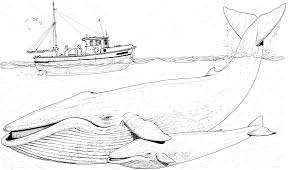 Small Picture Killer Whale Coloring Page Killer Whales Worksheets And Colour