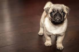 10 ways to deal with dogs on wood floors advice from a hardwood flooring pany