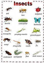 List Of Insect Names Insects Names List Of Insects