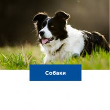 <b>Hill's</b> (<b>Хиллс</b>) - <b>корма</b> и зоотовары для кошек и собак в интернет ...