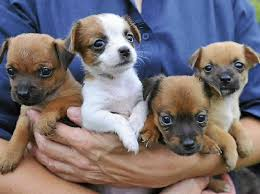cute puppies for sale 2014. Plain Sale Undefined Inside Cute Puppies For Sale 2014 Y