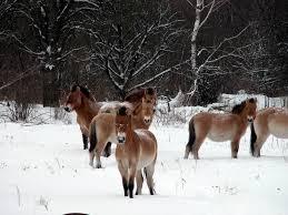Картинки по запросу вольеры беловежской пуще зимой