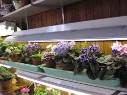 Kitchen Grow Lights Similiar Growing Vegetables Under Fluorescent Light Keywords