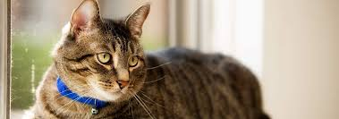 diy cat stain odor remover that