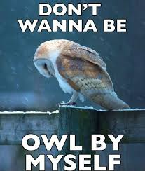 20 Hilariously Adorable Owl Memes via Relatably.com