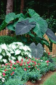 Small Picture 579 best Tropical northern gardens images on Pinterest Gardening