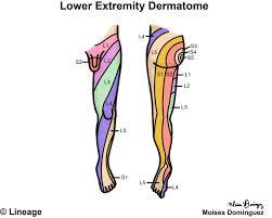 Dermatome Distribution Chart Dermatomes Neurology Medbullets Step 1