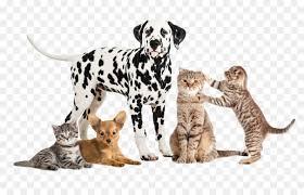 pet stock photography animal companion dog wildlife png