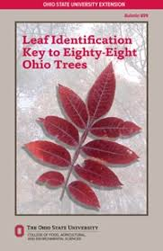 Ohio Leaf Identification Chart Leaf Identification Key To Eighty Eight Ohio Trees