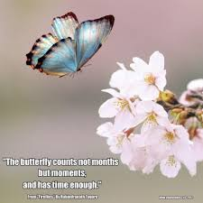 Inspirational Quotes About Butterflies And Life Inspiring Famous