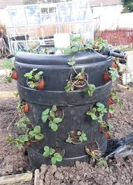 make your own strawberry barrel