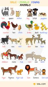 Animal Names Types Of Animals With List Pictures 7 E S L