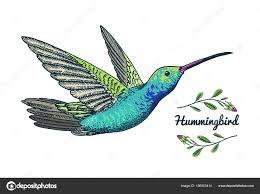 малые колибри Rufous птица экзотические тропические животные иконы
