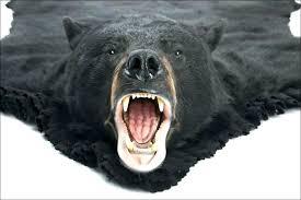 bear head rug bear rug fake head with good looking furniture awesome taxidermy polar for bear head rug