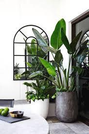 Interior Design Plants Inside House 27 Interior Design Plants Inside House Pictures Interior