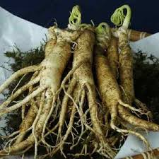 Ginseng Plant Extract