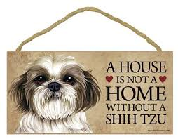 a house is not a home without shih tzu puppy cut short hair cut