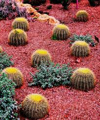 Small Picture Small Cactus Garden Design Garden ideas and garden design