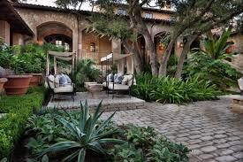 shade succulent plants