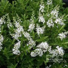 99 Best Garden  FERNS Images On Pinterest  Ferns Plants And Wall Climbing Plants Crossword