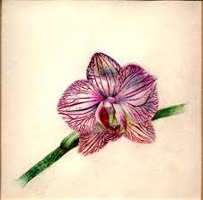 тату орхидея 100 фото вариантов эскизы значение для девушек