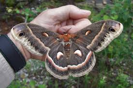 Image result for moths