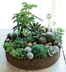 Propuestas deco con suculentas para interior y exterior. Succulent Garden  Diy IndoorIndoor ...