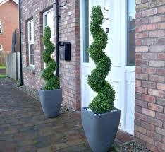 front door double spiral topiaries
