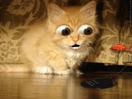 free cat screensavers angry cat es
