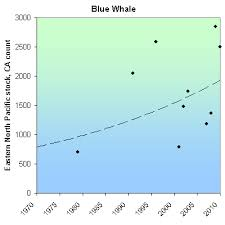 Species Recovery Blue Whale
