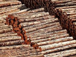 5 Technologies Help Thwart Illegal Logging By Tracing Woods Origin