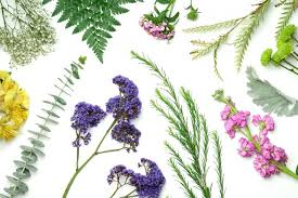 Flower Species Chart 20 Types Of Greenery And Filler Flowers Ftd Com