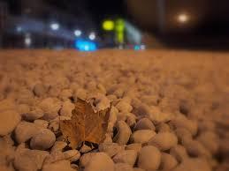 last leaf essay  last leaf essay