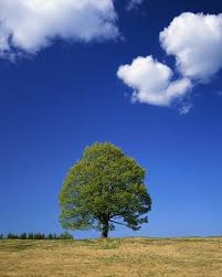 refuel your personal power by plugging into mother earth s lone tree in field aomori