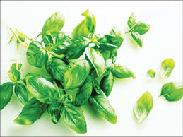 Fresh Basil To Dried Basil Conversion Chart Basil The Aromatic Green Herb Has Much To Do With India