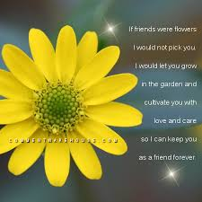 Flowers Quotes Gorgeous If Friends Were Flower I Would Not Pick You Comments Images Pics