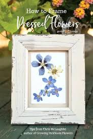 pressed flowers in glass frames how to frame pressed flowers in glass frames