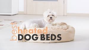 Best Heated Dog Beds 4 Warm & Cuddly Beds for Your Pup